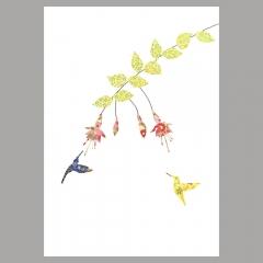 Grusskarte Fuchsia und Kolibris