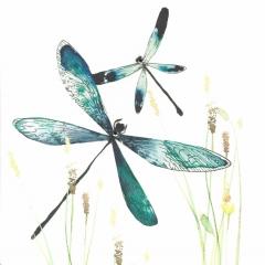 Doppelkarte Libellen