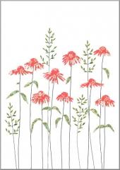 Grusskarte Echinacea