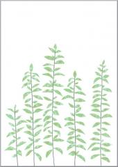 Grusskarte Teeblätter